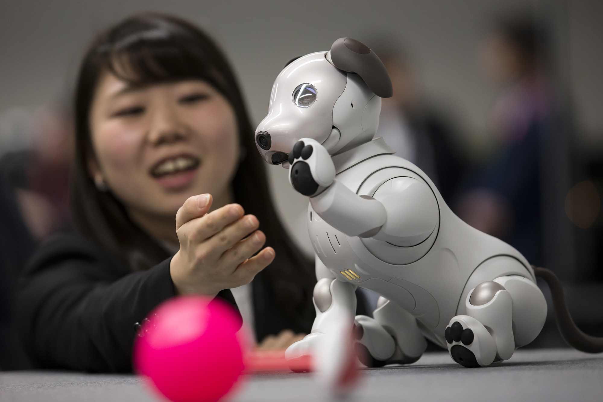 An attendee plays with Sony's robotic Aibo dog during a sales launch in Tokyo on Jan. 11.   BLOOMBERG