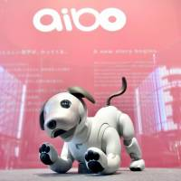 Sony Corp.'s robotic dog Aibo is displayed at the company's headquarters in Minato Ward, Tokyo, in January.   KYODO