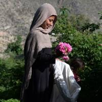 Make perfume, not war: Afghan farmers switching from poppies to roses enjoy sweet smell of success