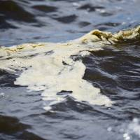 Toxic algae, seaweed and red tide threatening Florida waters and beaches