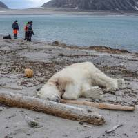 Polar bear shot dead after wounding cruise ship worker on Spitzbergen isle landing party