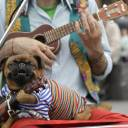 A dog sits in the lap of a street musician on Wednesday in St. Petersburg, Russia, during the 2018 soccer World Cup.