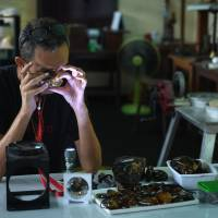 Akbar Khan, a 52-year-old self-described 'extreme fossil in amber hunter,' inspects a piece of honey-colored fossilized tree sap from Kachin state in Myanmar at his street stall in Bangkok on May 31. | AFP-JIJI