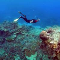Deep reefs won't be 'twilight zone' refuge for fish and coral, dive team warns in study