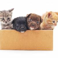 Japan lawmaker group eyes mandatory microchipping of puppies and kittens