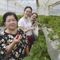 Fruit-picking tours luring more visitors to Japan