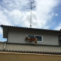 A 9-year-old miniature horse is stranded on the roof of the building in the Mabicho area in Kurashiki, Okayama Prefecture on Monday. | | COURTESY OF PEACE WINDS JAPAN, ASIA PACIFIC ALLIANCE JAPAN AND CIVIC FORCE