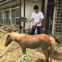 Staff of Peace Winds Japan take care of Leaf, a horse who fell from the roof of a home while crews attempted to rescue her. | COURTESTY OF PEACE WINDS JAPAN, ASIA PACIFIC ALLIANCE JAPAN AND CIVIC FORCE