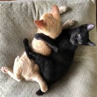 I got your back!: Two kittens named Eiswein and Nebbiolo