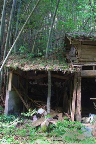 The world without us: Bamboo grows through an abandoned house in Kagoshima Prefecture.