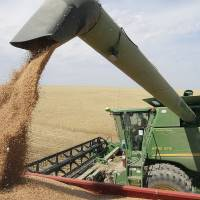 Wheat harvest is in full swing near Patterson, Washington, in July. The trade war with China is making life difficult for many farmers across Washington state. Washington State stands to lose $480 million in agricultural exports to China because of retaliatory tariffs, according to the state Department of Agriculture. | PAUL T. ERICKSON / THE TRI-CITY HERALD / VIA AP