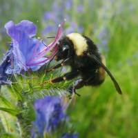 New class of pesticides, based on sulfoximine, may harm bees as much as neonicotinoids to be replaced