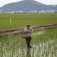 'Potentially catastrophic effects': Red Cross warns of North Korea food crisis as crops fail in heat