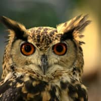 Whooo would like a cup of coffee?