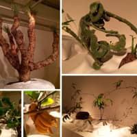 Attack of the plant hunters, green carnivores and fleshy girls