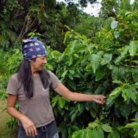 Motomi Nose takes care of coffee trees at her family's farm on Chichijima, one of the Ogasawara islands, in June.