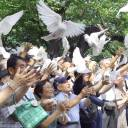 Attendees release pigeons at Yasukuni Shrine in Tokyo on Wednesday to commemorate the 73rd anniversary of the end of World War II.