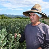 Fukushima's recovering farmers scramble to deal with scorching weather