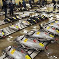 Wholesalers examine tuna at the Tsukiji fish market in Tokyo's Chuo Ward in this undated photo. Workers are trying to keep the expensive fish cool amid an air conditioning crisis and heat wave at the aging market. | JAPAN TIMES