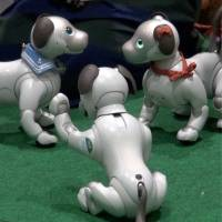 [VIDEO] Aibo fan meeting at Ginza Sony Park