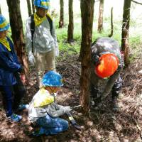 A tree thinning experience in an Oji forest in Shizuoka Prefecture.   OJI HOLDINGS CORP.