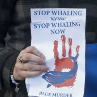 An anti-whaling protestor holds up a leaflet outside the Norwegian Embassy in central London, during a walk past the Norwegian, Icelandic and Japanese embassies in 2013. | AFP-JIJI