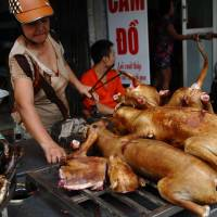 Hanoi urges residents to stop eating dog meat, cites image and rabies risk