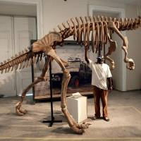 An employee dusts off a Suchomimus dinosaur skeleton at the National Museum in Rio de Janeiro in 2003. A massive fire Sunday ripped through Rio de Janeiro's treasured National Museum, one of Brazil's oldest, in what the nation's president says is a 'tragic' loss of knowledge and heritage. | VANDERLEI ALMEIDA / VIA AFP-JIJI