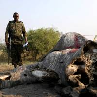 Botswana fights claims of rampant elephant poaching