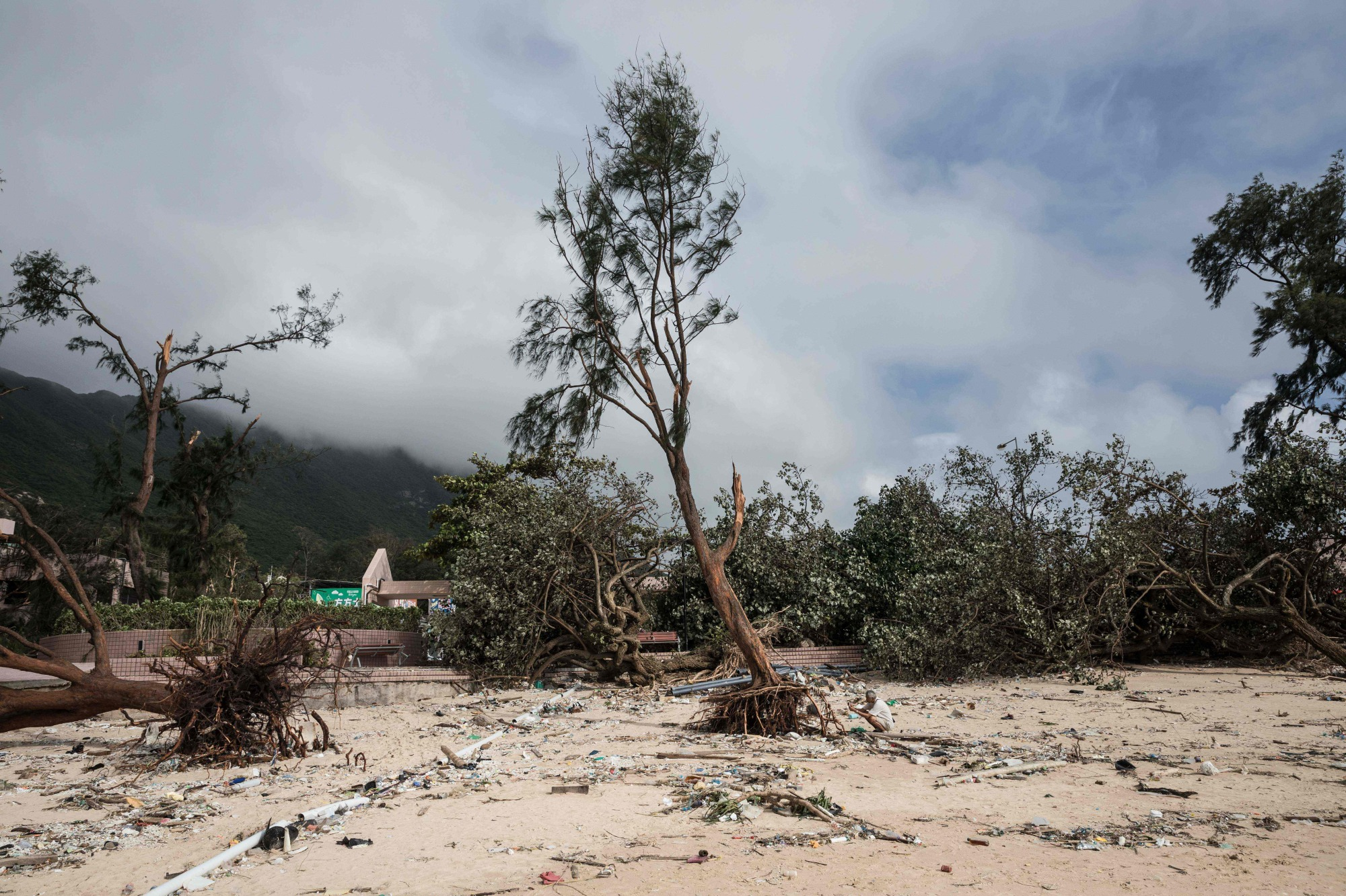 A man takes photographs of an uprooted tree on a beach on Sept. 18 in the aftermath of Typhoon Mangkhut in the coastal village of Shek O in Hong Kong. | AFP-JIJI
