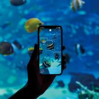 New app identifies underwater creatures at Japan aquariums with the tap of a finger
