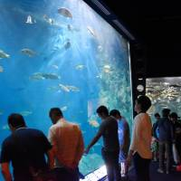 Visitors watch salmon at Chitose Aquarium in Hokkaido on Sunday, after the facility reopened following last Thursday's earthquake. | KYODO