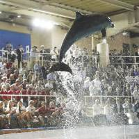 Sailors slam Japan for having dolphin show at World Cup opening