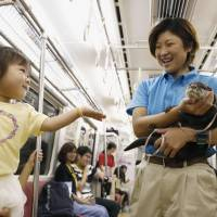 A child reaches out to an otter being held by a staff member in a train traveling from Shinagawa Station in Tokyo to Miurakaigan Station in Miura, Kanagawa Prefecture, on Sunday. The otter was taking part in an event to commemorate the 50th anniversary of Keikyu Aburatsubo Marine Park. | KYODO