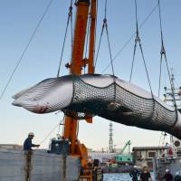 Japan on brink of IWC pullout after losing vote on commercial whaling plan