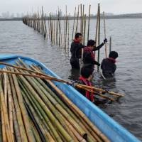 Volunteers place bamboo in Tokyo Bay to help foster an environment for marine life. | COURTESY OF YUZO SEKIGUCHI