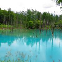 Desktop ready: The Blue Pond near the town of Shirogane Onsen in Biei, made famous as a  wallpaper for Apple's Mountain Lion operating system. | LOUISE GEORGE KITTAKA