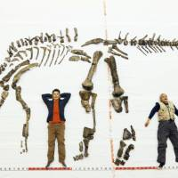 Fossils of largest dinosaur ever found in Japan go on show in Hokkaido