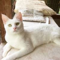 Glam girl: a white cat named Sarah