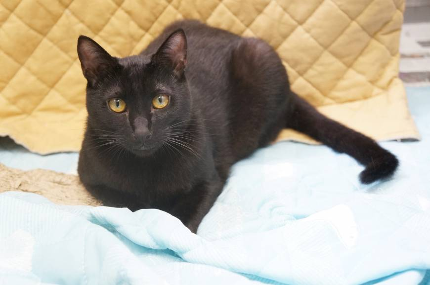 It's my time: a black cat named Morty