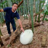 Hamana with a tsubo in the bamboo forest behind one of his farmhouses galleries.   LILY CROSSLEY-BAXTER