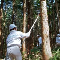 Suntory employees taking part in a forest conservation activity designed to preserve water sources. | SUNTORY HOLDINGS LTD.