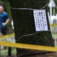 A sign attached to a tree in Meijo Park in Nagoya in late September warns visitors about hornets. | CHUNICHI SHIMBUN