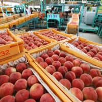 Peaches from Fukushima are sold at a market in the prefecture in July 2016. | KYODO