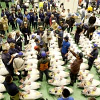 Wholesalers check the quality of frozen tuna displayed during the first tuna auctions on the opening day of the new Toyosu fish market on Thursday. | KYODO