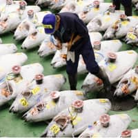 An intermediate fish wholesaler checks frozen tuna laid out on the floor before the debut auction starts at the Toyosu fish market in Tokyo's Koto Ward on Thursday morning. The Toyosu market was opened earlier in the day to replace the 83-year-old Tsukiji fish market, which was closed on Saturday. | KYODO