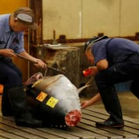Wholesalers check the quality of fresh tuna on display at the last tuna auctions at Tokyo's Tsukiji fish market before it moves to the new Toyosu market in Koto Ward. | REUTERS
