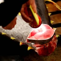 A wholesaler checks the quality of fresh tuna on Saturday at one of the last tuna auctions before the Tsukiji fish market moves to the Toyosu site. | REUTERS