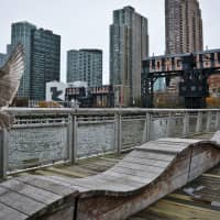 A sea gull flies off holding fish scraps near a former dock facility at Gantry State Park in the Long Island City section of the Queens Borough in New York on Tuesday. Amazon announced Tuesday it has selected the Queens neighborhood as one of two sites for its headquarters. | AP