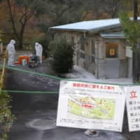 Second swine fever infection detected in Gifu Prefecture